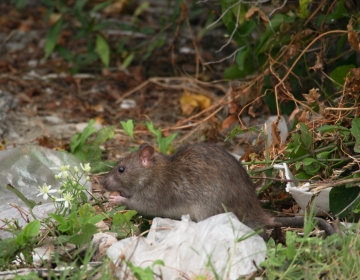 It's not all birds in Baltimore. There's at least one kind of mammal