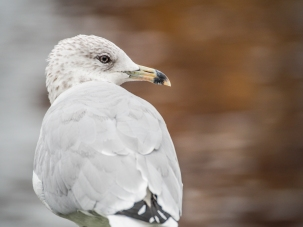 A gull watches the water