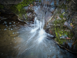 A forest waterfall.