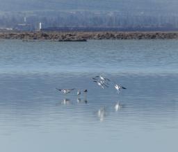 Don Edwards San Francisco Bay National Wildlife Refuge, a place saved for birds