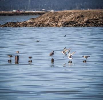 Migrating water birds.