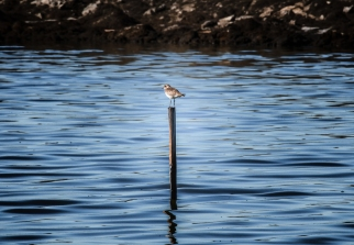 A bird perches on a pole.