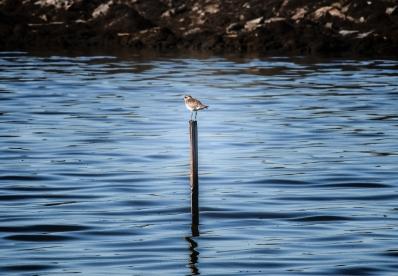A bird perches on a pole.