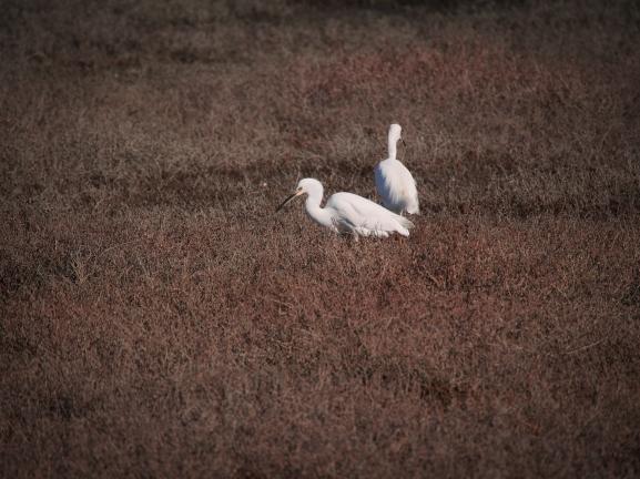 © Thea Artemis Kinyon Boodhoo 2015