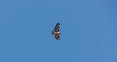 A hawk soared overhead.