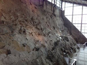 The wall of bones at Dinosaur National Monument is called Carnegie Quarry. The fossils are mostly sauropods from the Jurassic era, and the rock is called the Morrison formation.