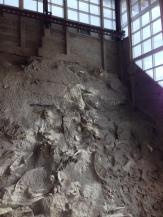Dinosaur bones in situ at Carnegie Quarry