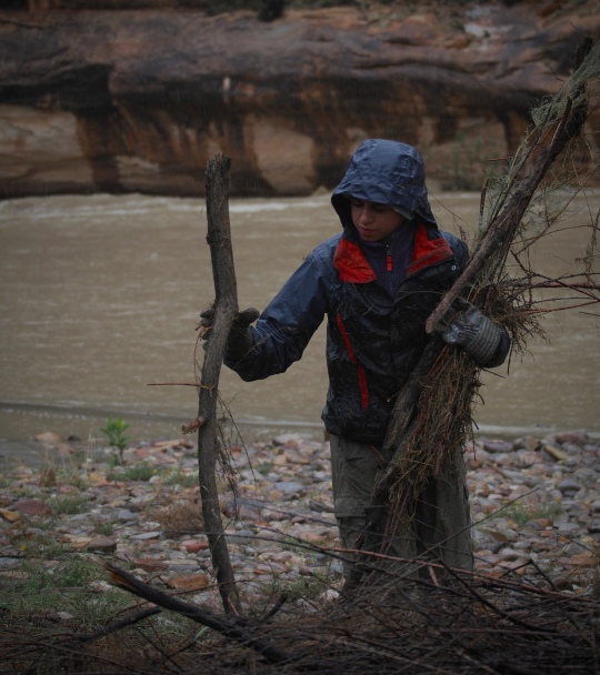Once the tamarisk has been left out for a year to kill any tissue that could propagate, the piles of wood must be disposed of. The wood ends up in the Green River, where it provides needed material for the ecosystem.